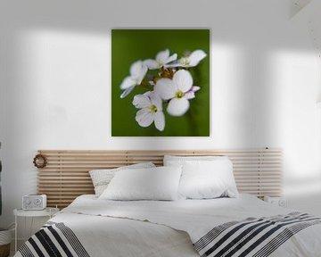 White flower von Alexander van der Sar