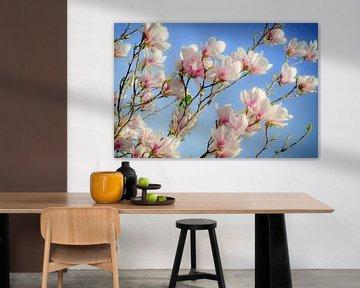 Magnolia van Steffen Gierok