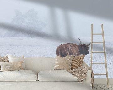 Schotse hooglander in wit berijpt veld van Karla Leeftink