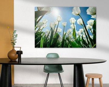 Feder zwischen den Tulpen von Fotografiecor .nl