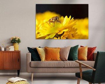 Yellow von André Dorst