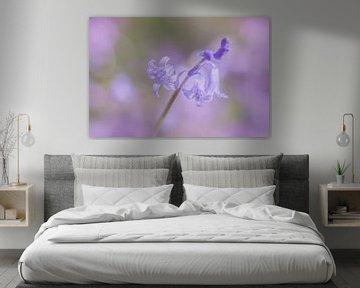 Boshyacint in de bloei von Karla Leeftink