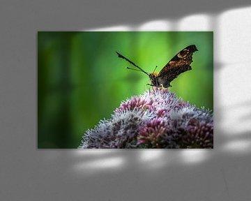 Vlinder op bloem von Cor Pot