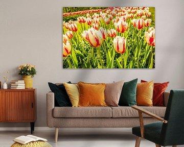 Meerkleurige tulpen von Stedom Fotografie