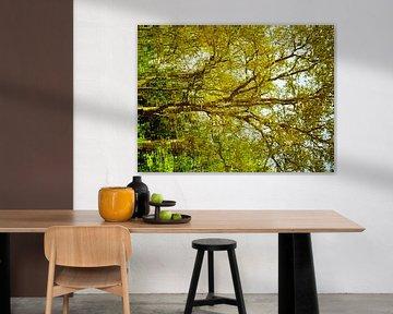 Tree Magic 161 van MoArt (Maurice Heuts)