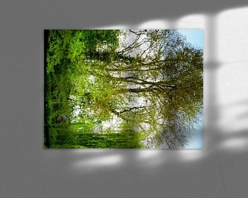Tree Magic 162 van MoArt (Maurice Heuts)