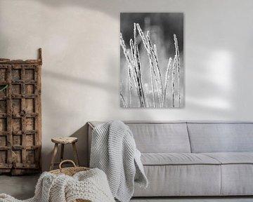 Bevroren gras van André Dorst