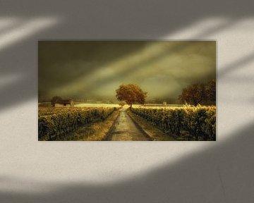 Spaziergang durch den Weinberg von Lars van de Goor