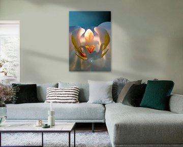 Orchid in bleulight #2 von Henry van Schijndel