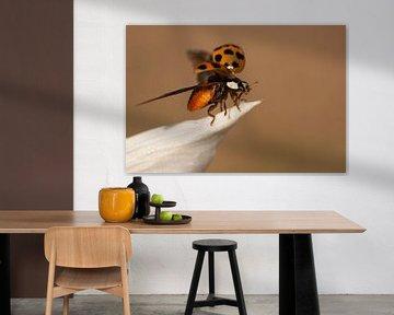Opvliegend lieveheersbeestje van Margreet Frowijn