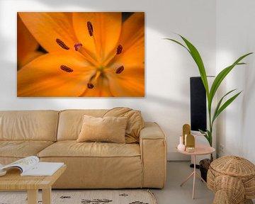 Oranje bloem van Martijn van Dellen