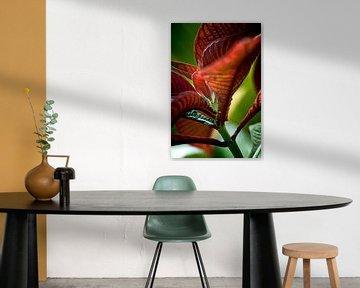 Red Leaf von Focus Studio Fotografie