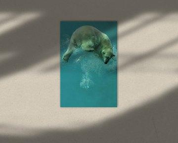 IJsbeer onder water. van Tilly Meijer