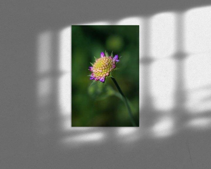 Sfeerimpressie: Mooie zomerbloem in closeup  van Lily Ploeg