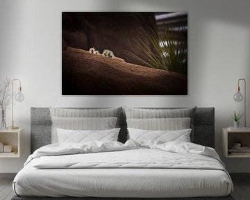 Cactus landscape van Focus Studio Fotografie