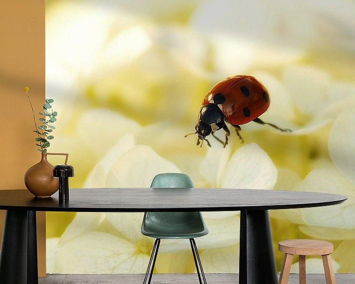 Sfeerimpressie behang: Lieveheersbeestje op de witte hortensia van Jessica Berendsen