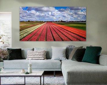 Bloemenvelden met Nederlandse Tulpen von Dutch Creator