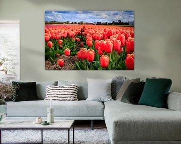 Nederlandse tulpen in bloei von Dutch Creator