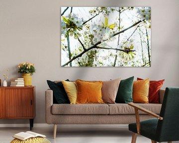 Obstblüte mit strahlender Frühlingssonne von Fotografiecor .nl