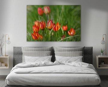 Vrolijke tulpen familie von Lily Ploeg