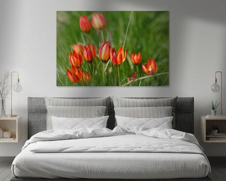 Sfeerimpressie: Vrolijke tulpen familie van Lily Ploeg