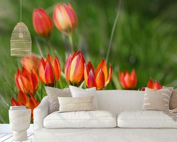 Sfeerimpressie behang: Vrolijke tulpen familie van Lily Ploeg