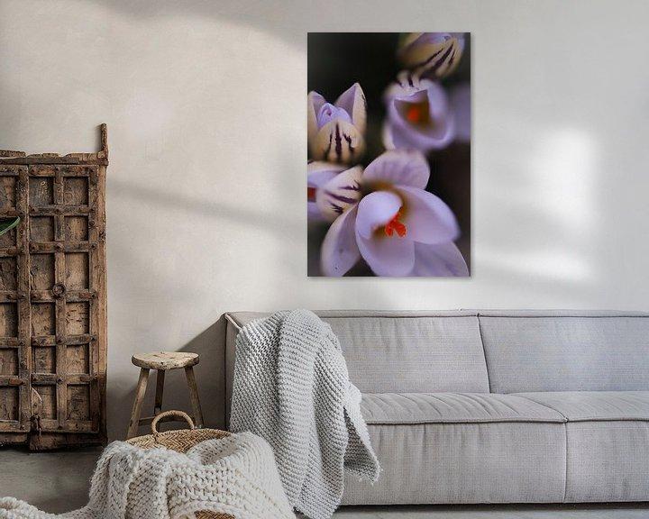 Sfeerimpressie: Botanische krokussen  van Lily Ploeg