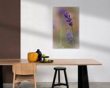 Lavendel von Lily Ploeg