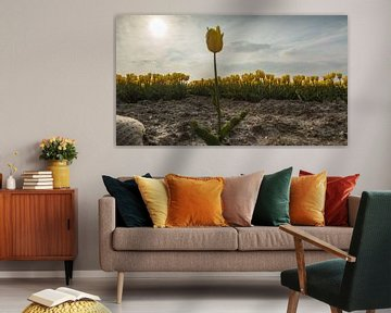 Yellow Tulips 4 van Arjan Benders