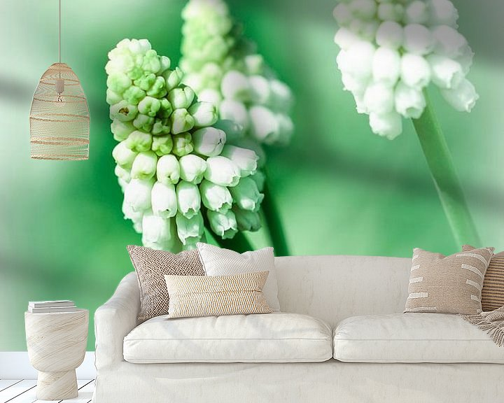 Sfeerimpressie behang: Witte druif hyacinth van Lily Ploeg