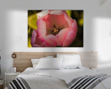 Roze tulp van dichtbij von Stedom Fotografie
