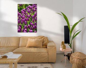 Violettes Zwiebelfeld mit blühenden Tulpen von Fotografiecor .nl