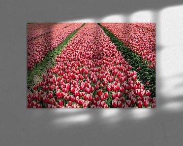 Tulpen landschap van Fotografiecor .nl