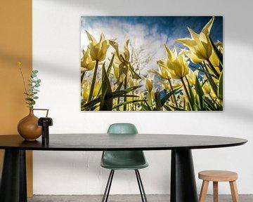 Tulpen vol in bloei von Stedom Fotografie
