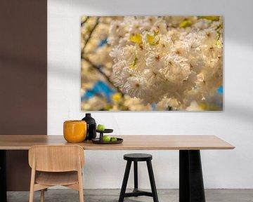 Bloeiende bloesem op een lentedag von Stedom Fotografie