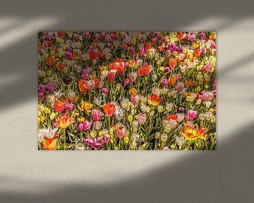 Tulpenveld vol kleuren von Stedom Fotografie