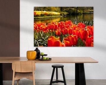 Hollandse tulpen von Stedom Fotografie