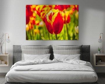 Gekleurd tulpenveld von Stedom Fotografie