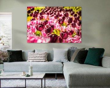 Paars en roze tulpen von Stedom Fotografie