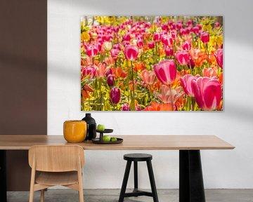 Kleurrijk veld tulpen von Stedom Fotografie