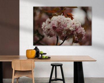 Weiche rosa Farben der japanischen Kirsche von Cora Unk