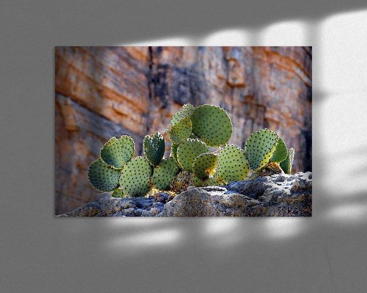 Sfeerimpressie: Stoere Cactussen van Paul van Baardwijk