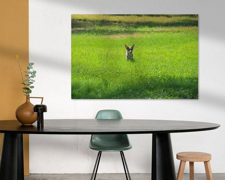 Impression: Coyote Wildlife sur Paul van Baardwijk