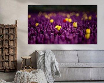 Ist es ein violettes oder gelbes Tulpenfeld? von Fotografiecor .nl