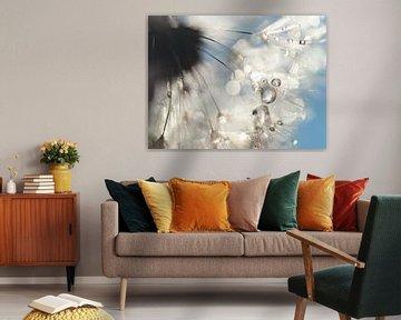 Dandelion Angelwings
