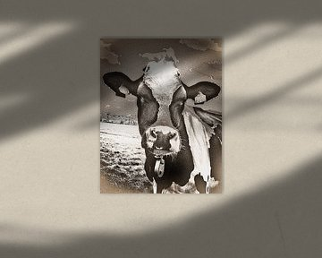Nieuwsgierige koe in het weiland.