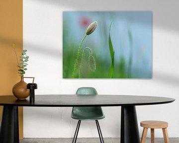 Bijna in bloei van Birgitte Bergman
