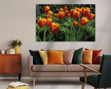 Tulpenfeld von Marion Engelhardt