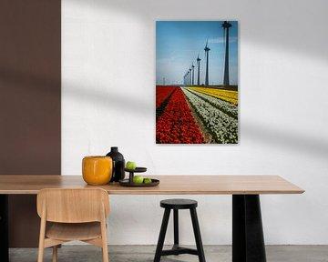 Tulpe und Windmühle von Dirk Duipmans