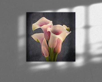 calla bloem